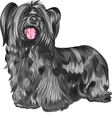 Funny shaggy smiling dog Skye Terrier breed vector image