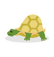 turtle flat vector image