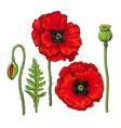 hand drawn set of red poppy flower bud pod leaf vector image