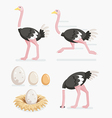 Ostrich and ostrich eggs on the nests flat design vector image