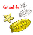 starfruit or carambola fruit isolated sketch vector image