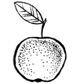 Apple Sketch Hand Draw vector image