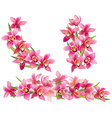 Garland of orchids vector image vector image