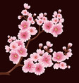 sakura flower branch element elegant vector image