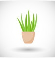 aloe vera plant in pot flat icon vector image