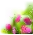 background tulips vector image