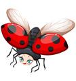 Ladybug flying on white background vector image