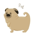 Pug isolated on white Child fun pattern icon vector image
