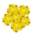 Yellow Yarrow Flowers or Achillea Millefolium Flow vector image vector image
