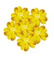 Yellow Yarrow Flowers or Achillea Millefolium Flow vector image