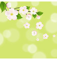 Pink Apple Tree Flowers With Bokeh vector image vector image