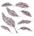 Elegant Feathers Set vector image