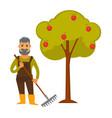 elderly man with rake stands beside apple tree vector image