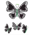 Butterflys vector image vector image