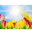 Tulips growing in garden on green EPS 10 vector image