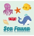 Sea Fauna graphic design vector image
