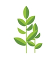 Nature tea plant green leaves isolated on vector image