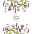 herbal frame vector image