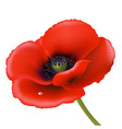 Red Poppy vector image