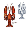 lobster seafood animal or crayfish sketch vector image vector image