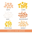 Cereals and grain oats rice buckwheat isolated vector image
