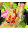 Koi swimming in the pond vector image