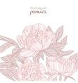 Beautiful peonies pink line art background vector image vector image