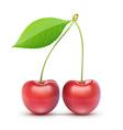 red fresh cherries vector image vector image