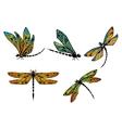 Dragonflies with ornamental openwork wings vector image