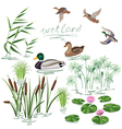 wetland plant and duck vector image