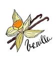 Hand drawn Vanilla flower and sticks vector image