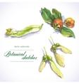botanical sketches vector image