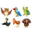 Six different species of birds vector image