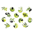 Olive tree branches with glossy olives vector image