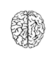 Human brain for medical design vector image