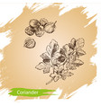 background sketch the herbs and spice vector image