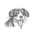Face of dog hand drawn Sketch on white background vector image
