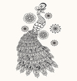 Hand drawn Peacock for vector image