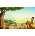 Horses at the hill near the tree vector image