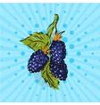 color blackberry on blue background vector image
