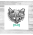 cat face sketch vector image vector image