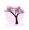 blooming sacura tree vector image
