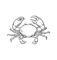 sketch cartoon sea crayfish crab isolated vector image