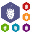 Blackberry fruit icons set hexagon vector image