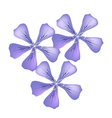 Purple Geranium Flowers or Pelargonium Graveolens vector image