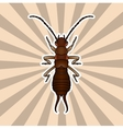 Insect anatomy Sticker Forficula auricularia vector image