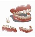 Human jaw and tooth molar closeup vector image