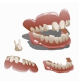 Human jaw and tooth molar closeup vector image