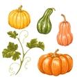 Set of pumpkins Collection decorative vegetables vector image
