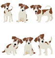 Jack Russell Terrier of a dog vector image
